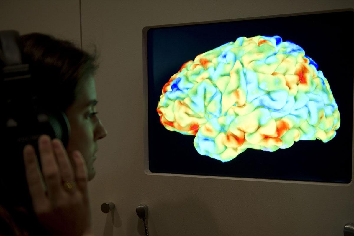 krimpen hersenen