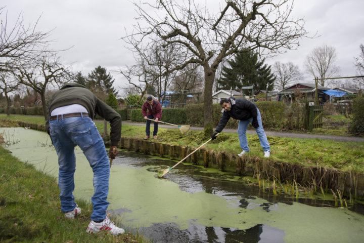 2016-02-01 16:48:34 UTRECHT - Vluchtelingen aan het werk in ecologisch tuinenpark De Driehoek. Het volkstuinencomplex stelt vluchtelingen in staat om vrijwilligerswerk in het groen te doen. ANP PIROSCHKA VAN DE WOUW