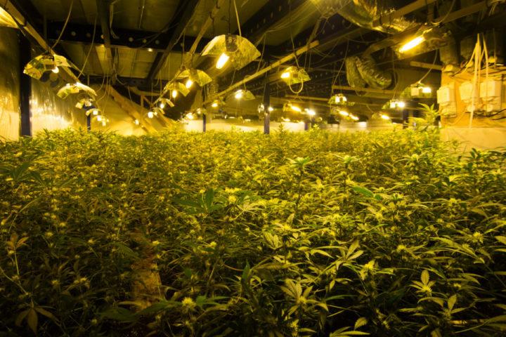 2014-05-14 11:45:21 GRONINGEN - Een grote hennepkwekerij in een loods op een bedrijventerrein in Groningen is door de politie ontruimd. In totaal werden er in het pand 6780 wietplanten aangetroffen. De straatwaarde, van één oogst, wordt geschat op ruim 580.000 euro. De politie heeft nog geen personen aangehouden. ANP GINOPRESS