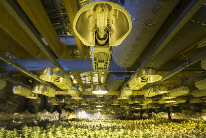 2015-01-27 16:01:59 ZALTBOMMEL - Hennepplantjes in een bedrijfspand. In de kwekerij waren 30.000 planten aanwezig. Agenten hielden twee verdachten aan die bij het pand aanwezig waren. ANP PIROSCHKA VAN DE WOUW