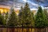 Op zoek naar de perfecte kerstboom, zo doet u dat