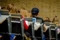 CDA-jongeren: Voer basisbeurs opnieuw in