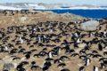 Wat we kunnen afleiden uit wetenschappelijke zeperd pinguïns