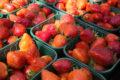 Voortleven als struik: groenten van het graf