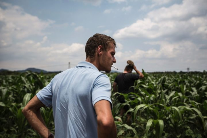 2017-02-14 09:44:31 South African Farm owners Jacques Prinsloo and Johan Smith walk through a patch of corn crop infested with armyworm in Onderstepoort, north of Pretoria on February 14, 2017. / AFP PHOTO / GULSHAN KHAN