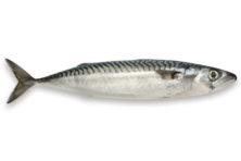 Meer makreel: alternatief voor (dure) zalm