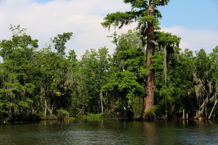 Louisiana Bayou Cypress Swamp South River Water