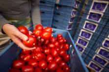 'Ons hart klopt voor tomaten'