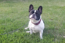 Flinke discussie: boete voor loslopende honden?