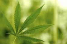 Hoe zit het eigenlijk met het drugsbeleid?