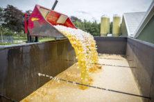 Barnevelds wondermiddel: eiercrisis bedreigt voedselexport