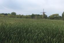 Holland, Michigan: waar Nederland nooit echt is veranderd