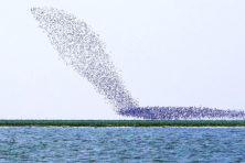 Kun je koers van vogelzwermen berekenen?