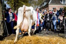 Vreemd: Duitse auto's mogen meer dan Nederlandse koeien