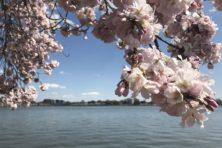 Zo ziet lente in Washington DC eruit