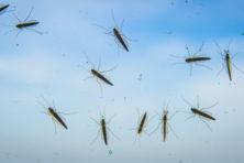 Zorgen over insecten misbruikt voor politieke campagnes