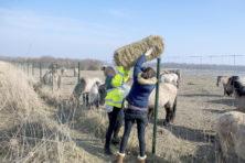 Wat drijft de strijders voor de grote grazers?
