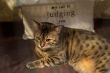 Mmiihiii: op zoek naar de geheime kattencode