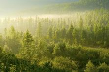 Mechanische bomen in de strijd tegen klimaatverandering