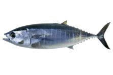 De strijd tegen de 'foute tonijn'