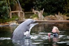 Bescherm mens en dolfijn tegen dierenfanaten