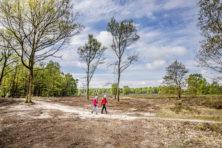 Groene gekte: bomen kappen voor de natuur
