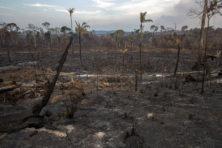 Branden Amazone: waarom raakten we in rep en roer?