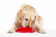 Zoetstof in ontbijtkoek gevaarlijk voor hond