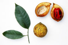 Nootmuskaat: een vergeten specerij