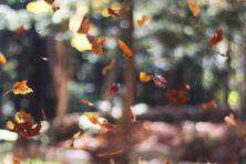 Scholieren trappen als bakens van levenslust de herfst aan flarden