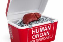 Machine houdt lever week intact buiten lichaam