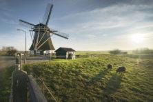 Prachtige 'Mondriaanmolen', prachtige polder – nog wel