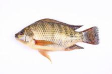 Betaalbare vis met slecht imago onder gastronomen