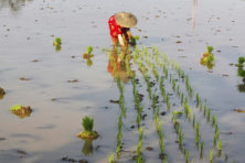 Levensverlengend gen ontdekt bij planten. Een voedselrevolutie?