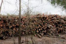 Urgenda maakt kachel aan met biomassa: 'dan liever aardgas'