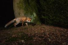 Natuurfans gaan steeds meer aan de slag met de wildcamera