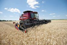De plattelandsbank die uitgroeide tot agrarische wereldmacht