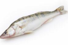 Waarom eten Nederlanders slechts mondjesmaat vaderlandse vis?