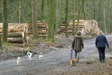 28 vragen over de bomenkap in Nederland