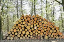 Pandemie en lockdown versnellen wereldwijd de ontbossing