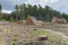 Het blijft raar dat Staatsbosbeheer zich bezig houdt met bomenkap