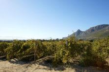 Coronamaatregelen schaden toch al weinig florissante wijnindustrie