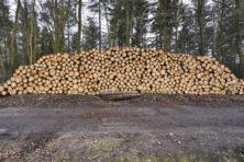 Bomen moeten wijken voor economische activiteiten
