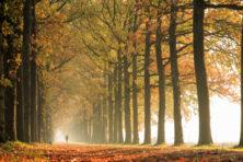 Waar en hoe is het mooi herfstwandelen?